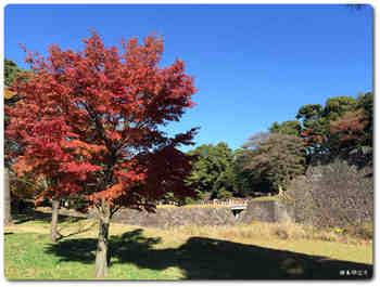 紅葉と西桔橋.JPG