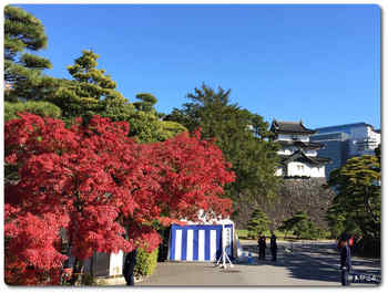 富士見櫓と紅葉.JPG